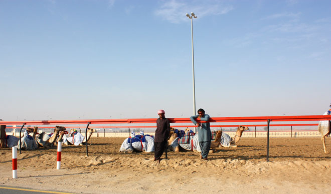 Platinum Heritage - Desert Safari Dubai - Breakfast with a Bedouin - Camel Racing Dubai
