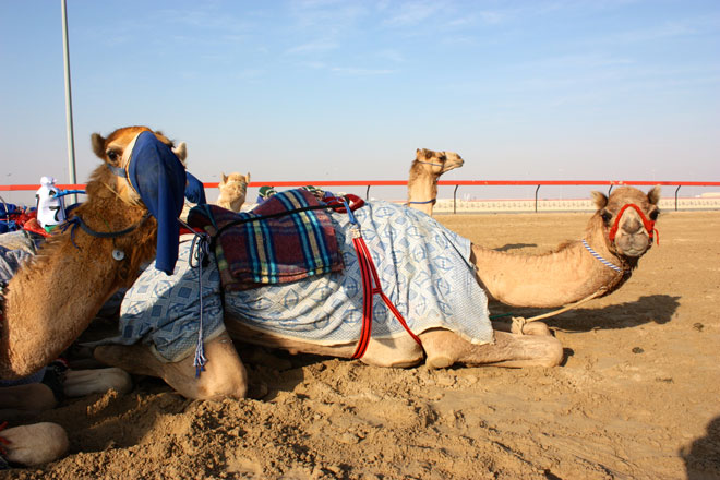 Platinum Heritage - Desert Safari Dubai - Breakfast with a Bedouin - Camel Racing UAE