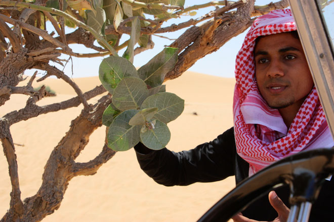 Platinum Heritage - Desert Safari Dubai - Breakfast with a Bedouin - How bedouin survive in the desert - edible plants