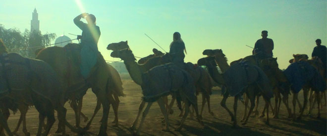 Platinum Heritage - Desert Safari Dubai - Breakfast with a Bedouin - Camels