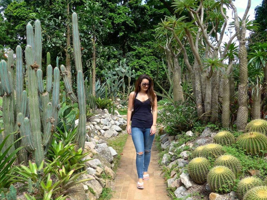 Botanical Garden Rio de Janeiro - Jardim Botanico do RIo de Janeiro - Cactus / Cacti