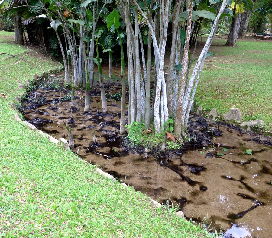 Botanical Garden Rio de Janeiro - Jardim Botanico do RIo de Janeiro - Swamp