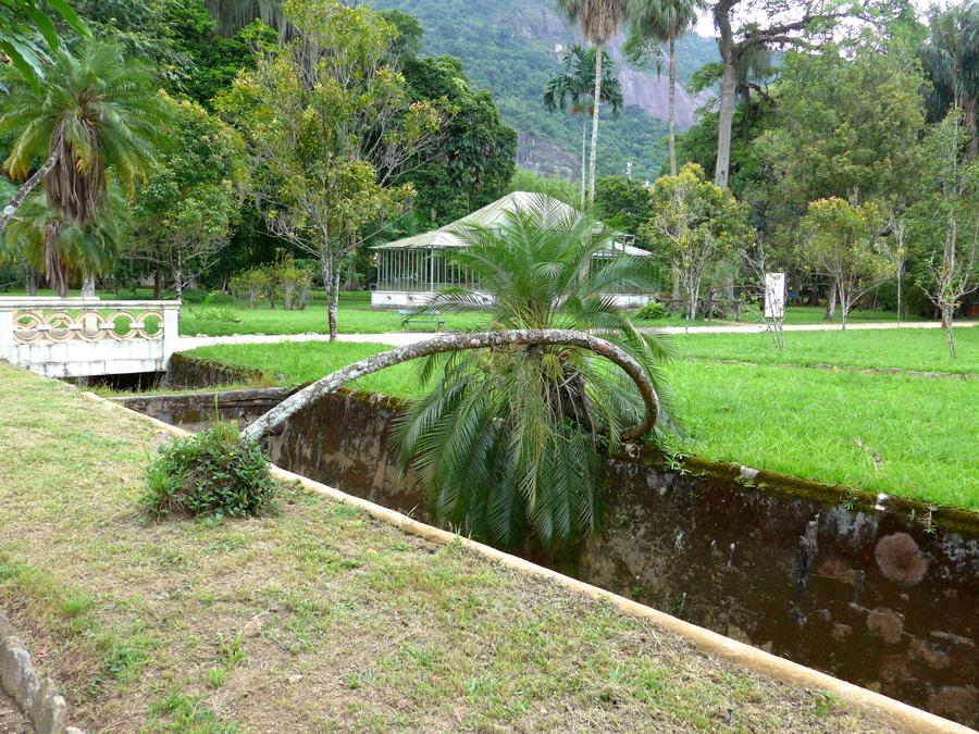 Botanical Garden Rio de Janeiro - Jardim Botanico do RIo de Janeiro - Lazy palm tree