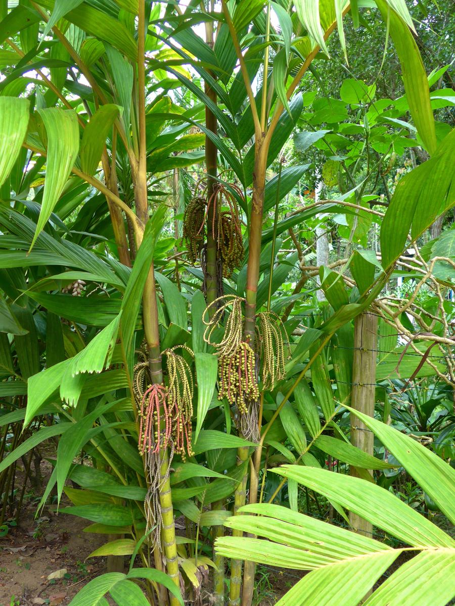 Botanical Garden Rio de Janeiro - Jardim Botanico do RIo de Janeiro - Beautiful seeds