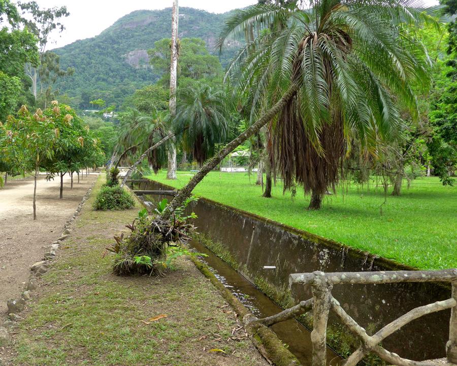 Botanical Garden Rio de Janeiro - Jardim Botanico do RIo de Janeiro - Bending palm trees