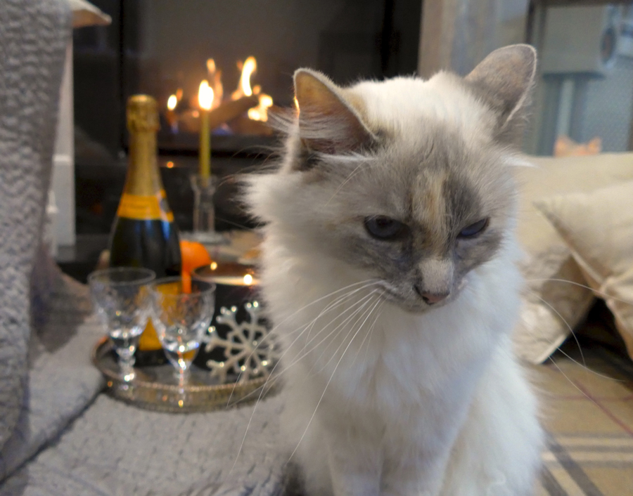 Birman-cat-by-fire