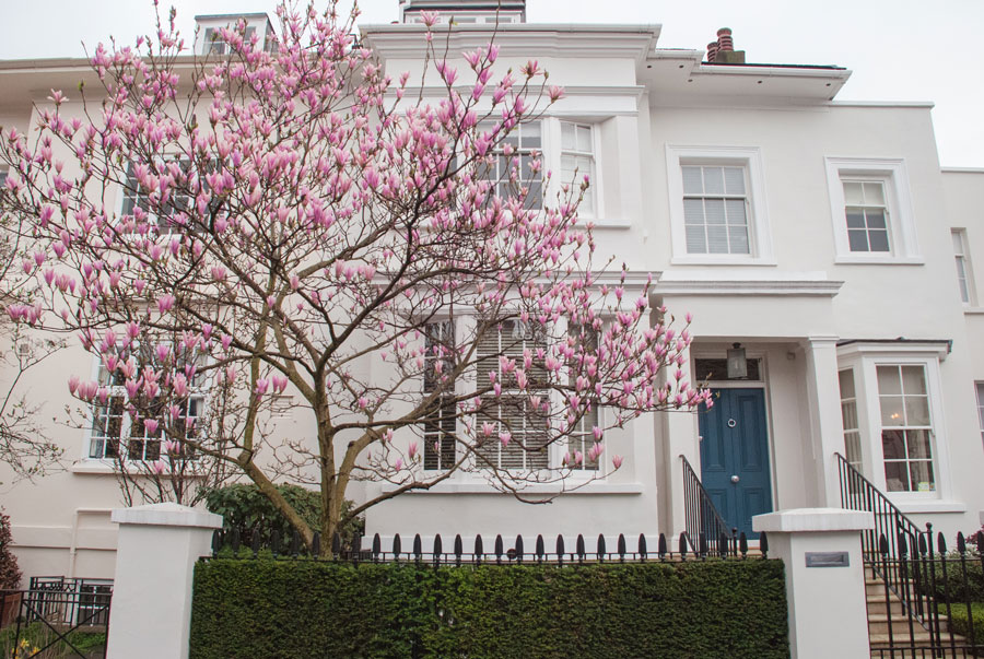 Albert-Place-Kensington-London-Magnolia-Blossom