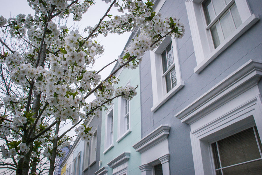 Farm-Place-Notting-Hill-Blossom-London