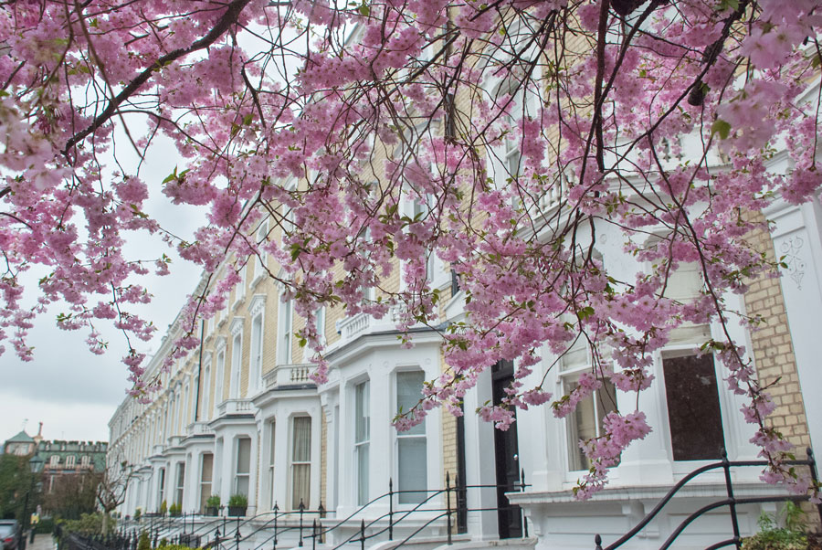 Glebe-Place-Chelsea-London-Cherry-Blossom