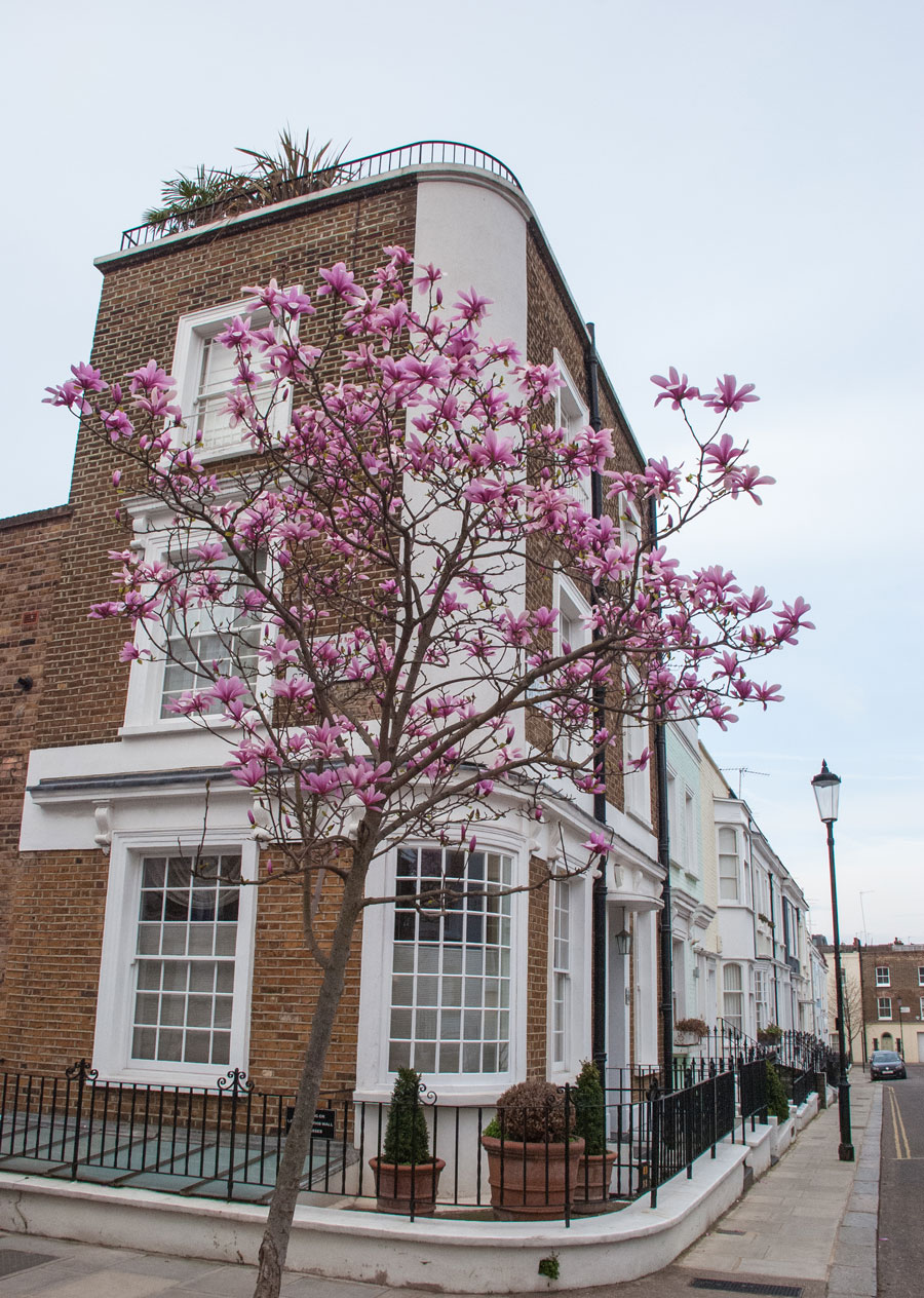 Hillgate-Street-Notting-Hill-Blossom-London