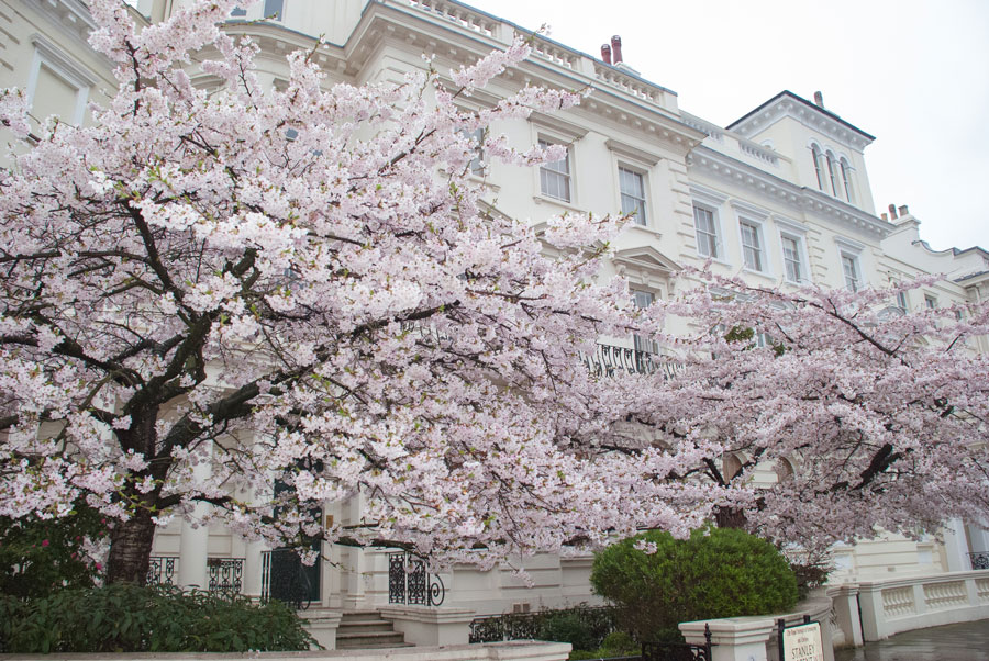 Kensington-Park-Gardens-Notting-Hill-Blossom-London