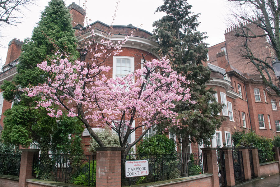 Oakwood-Court-Holland-Park-Blossom-London