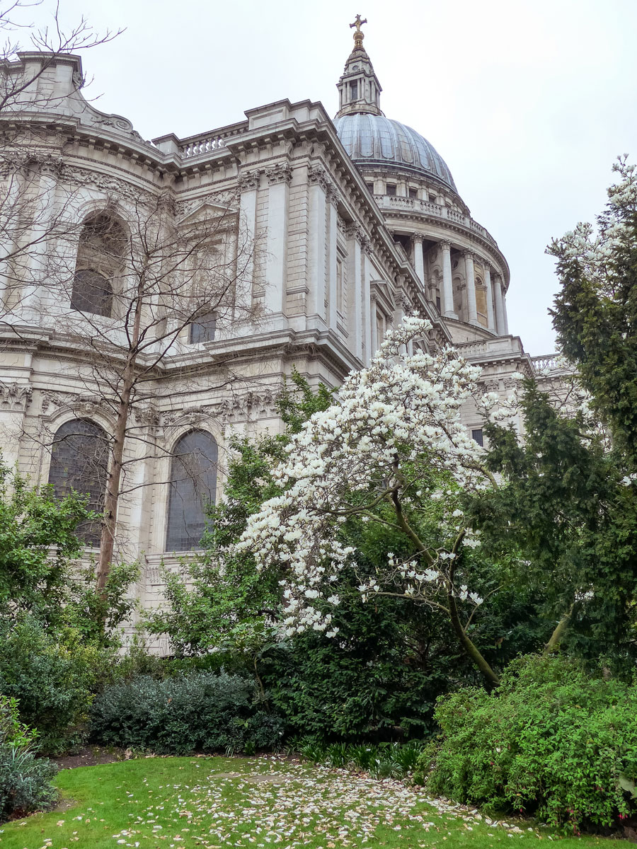 St-Paul's-Cathedral-Blossom-Magnolia