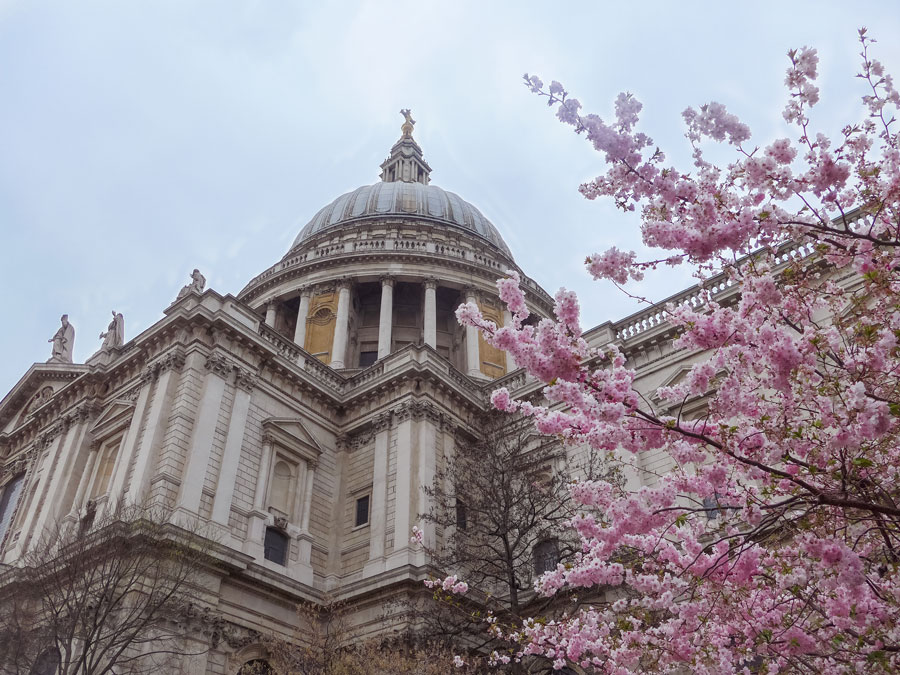 St-Paul's-Cathedral-Cherry-Blossom