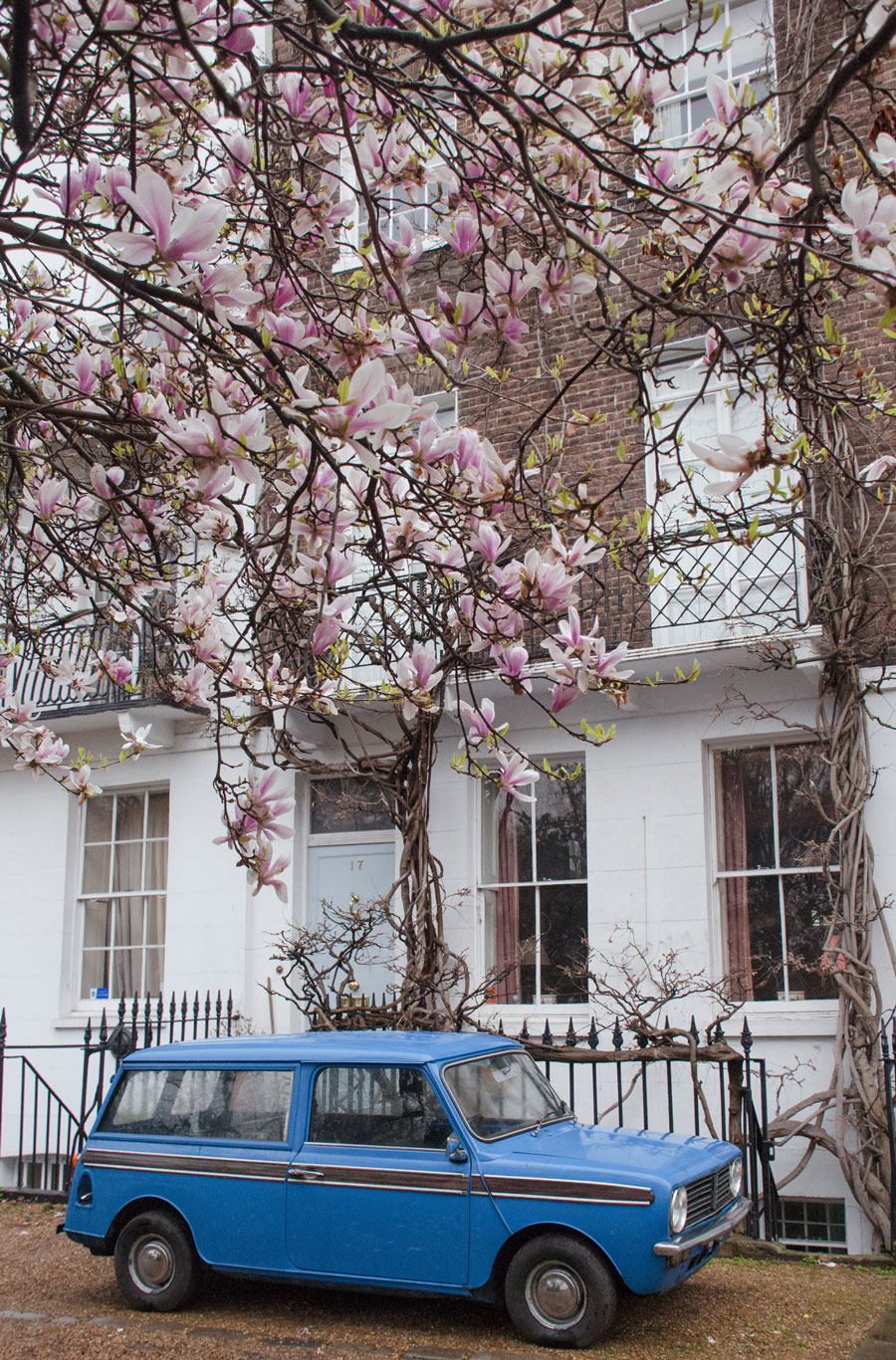 St.-Leonard's-Terrace-Chelsea-London-Magnolia-Blossom-Cherry-Blossom-Wisteria