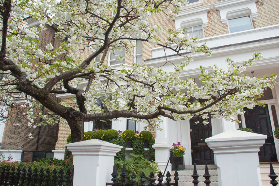 The-Little-Boltons-Kensington-Blossom-London