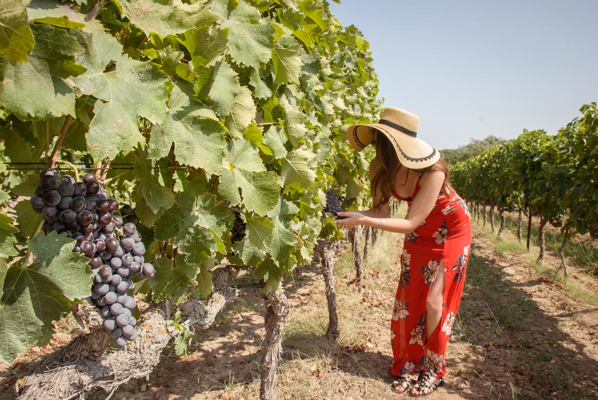 Provence-Villages-South-of-France.-Provence-Luberon.Domaine-de-marie-vineyard.-provence-vineyards