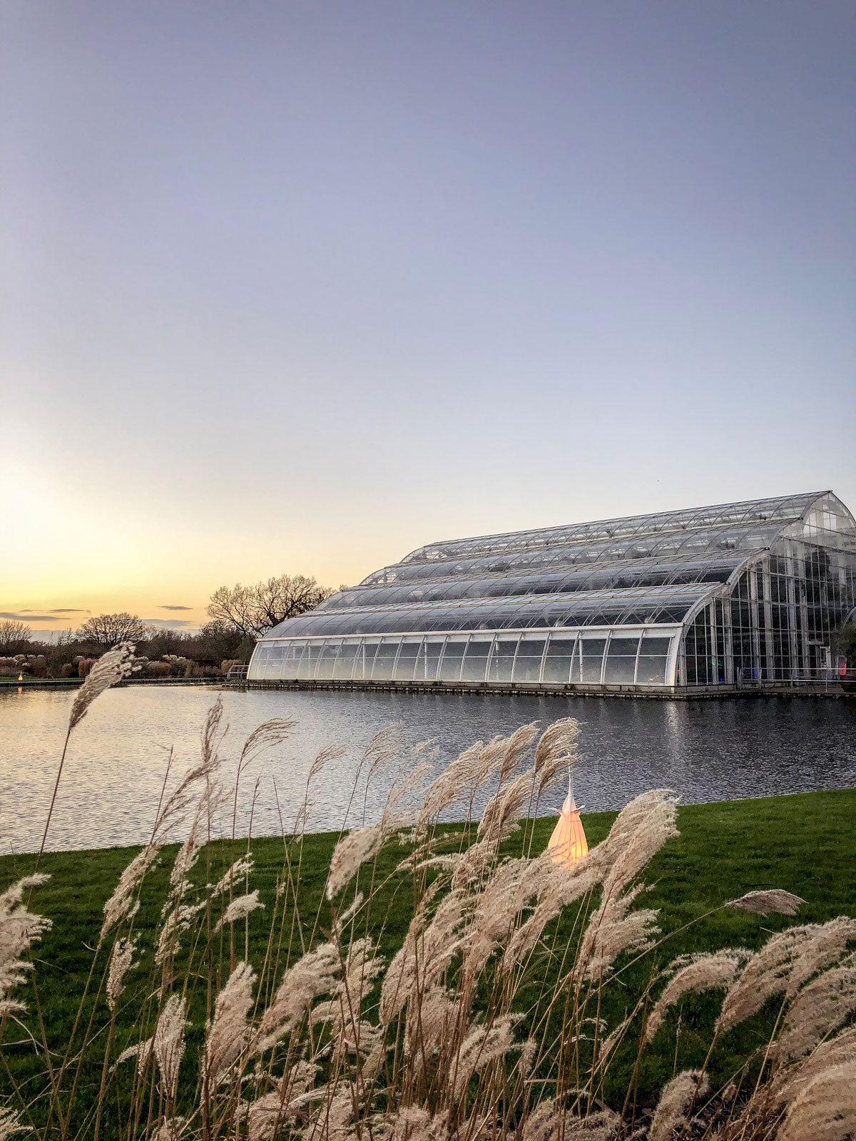 RHS Wisley Glow 2018 Glasshouse at sunset and pampas grass