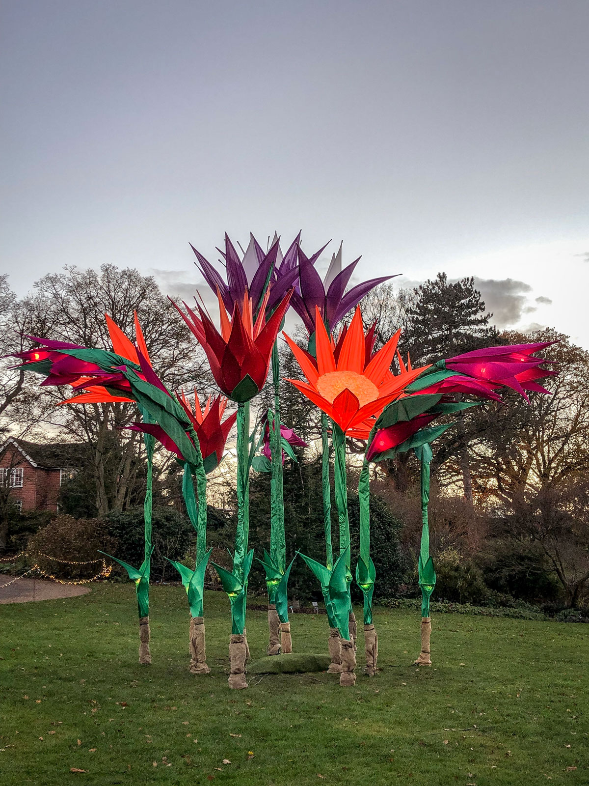 RHS Wisley Glow 2018 illuminated flowers during day