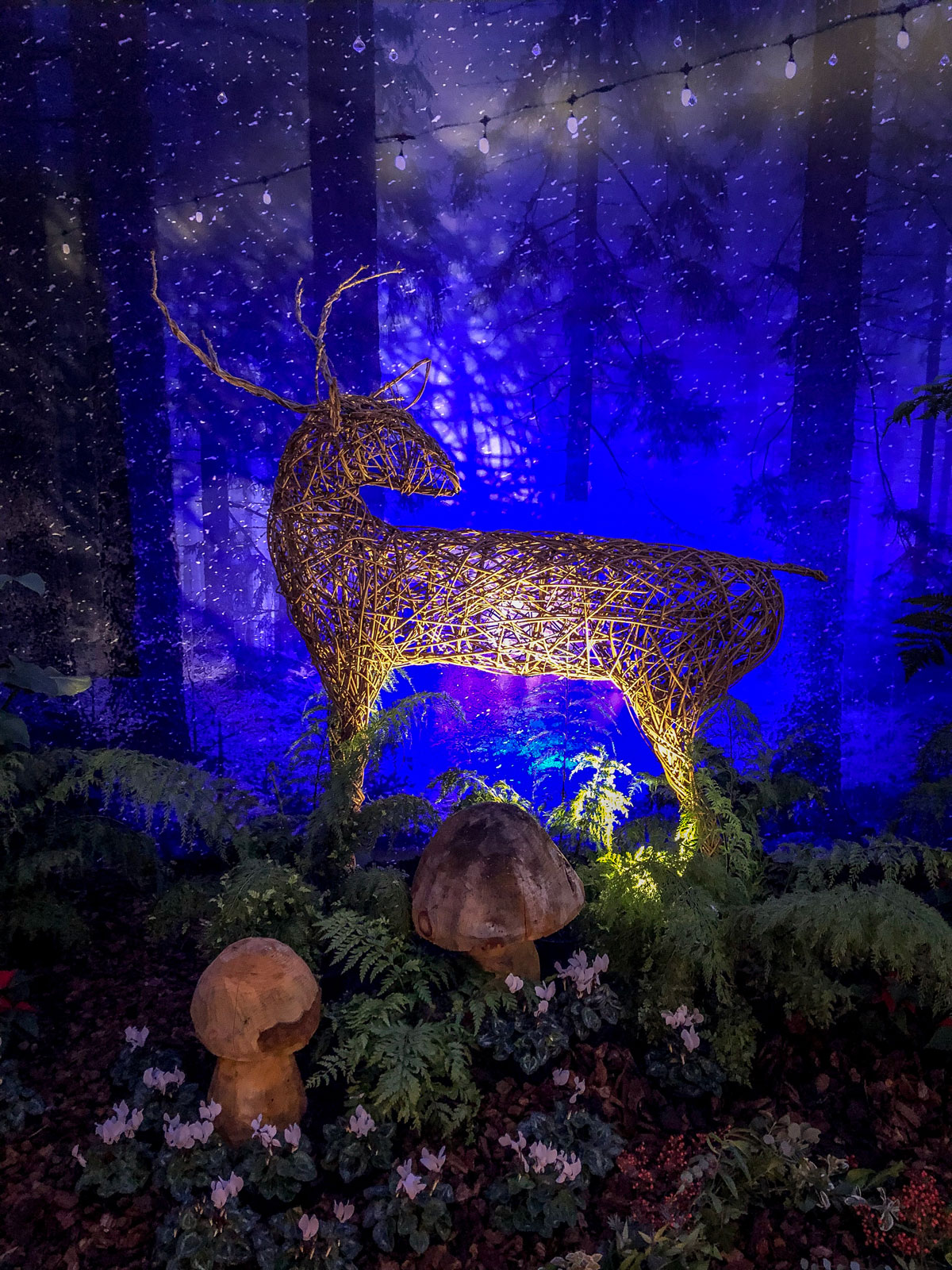 RHS Wisley Glow 2018 reindeer display in Glasshouse