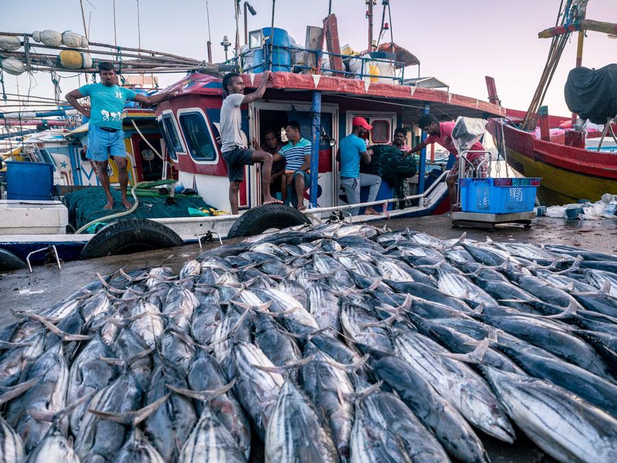 Beruwala Fish Market Sri Lanka