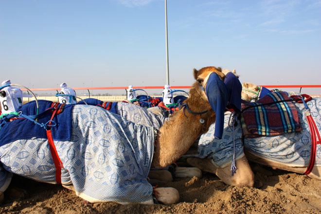 Platinum Heritage - Desert Safari Dubai - Breakfast with a Bedouin - Camel Races Dubai