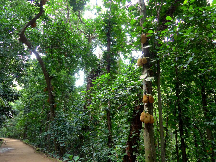 Botanical Garden Rio de Janeiro - Jardim Botanico do RIo de Janeiro - Atlantic Forest