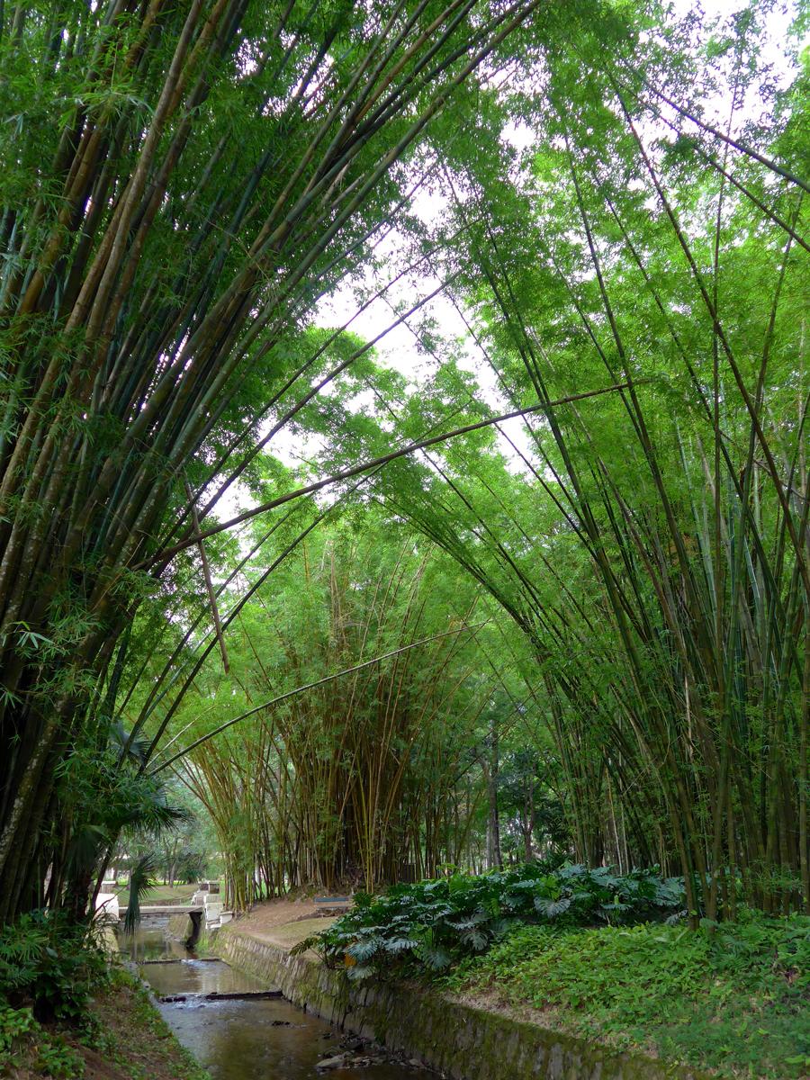 Botanical Garden Rio de Janeiro - Jardim Botanico do RIo de Janeiro - Bamboo arch