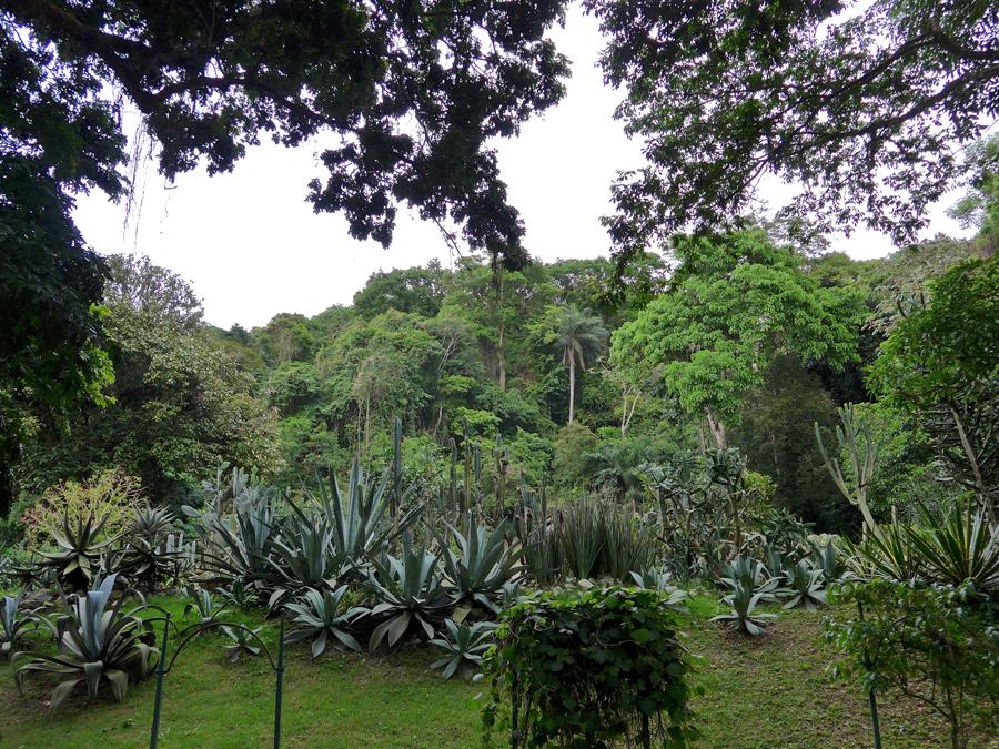 Botanical Garden Rio de Janeiro - Jardim Botanico do RIo de Janeiro - View up to Atlantic Forest
