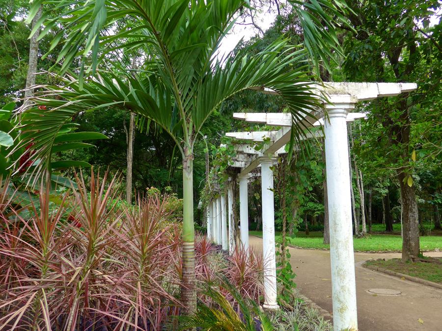 Botanical Garden Rio de Janeiro - Jardim Botanico do RIo de Janeiro - Pergola