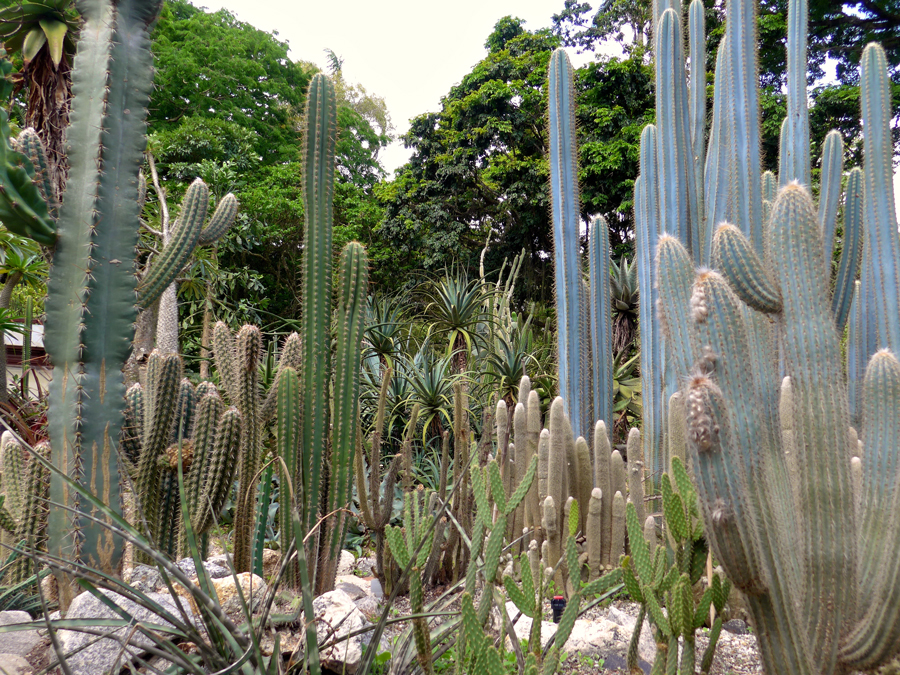 Botanical Garden Rio de Janeiro - Jardim Botanico do RIo de Janeiro - Cacti