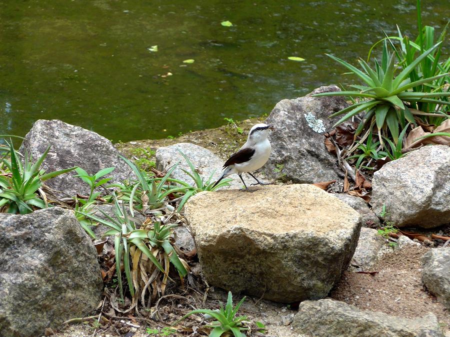 Botanical Garden Rio de Janeiro - Jardim Botanico do RIo de Janeiro - White-Monjita