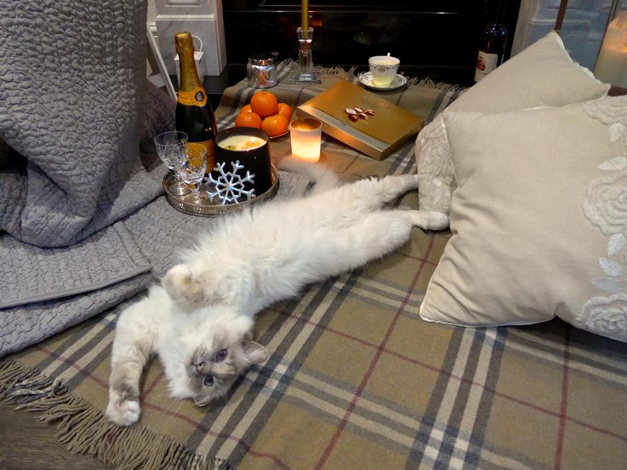 Cat-lying-on-back-by-the-fire---Birman-Hygge