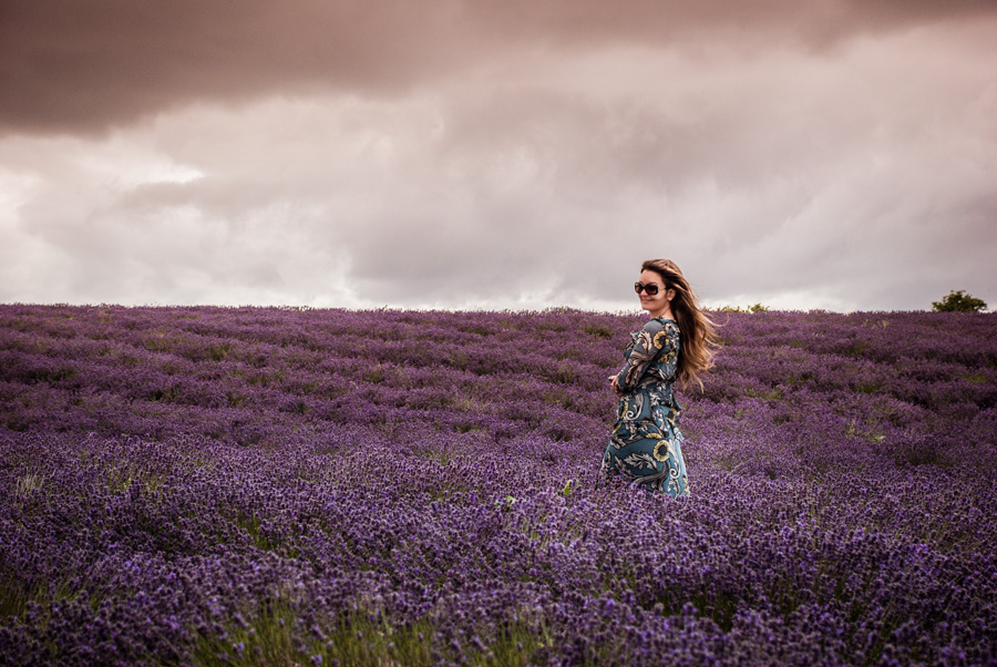Cotswold Lavender fields sunset
