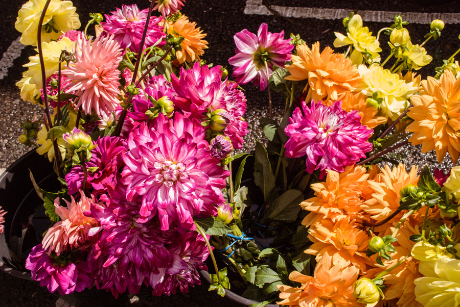 Columbia Road Flower Market Dahlias