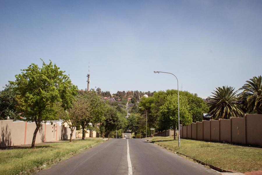 Jacaranda Trees flowering - Houghton, Observatory, Johannesburg, South Africa
