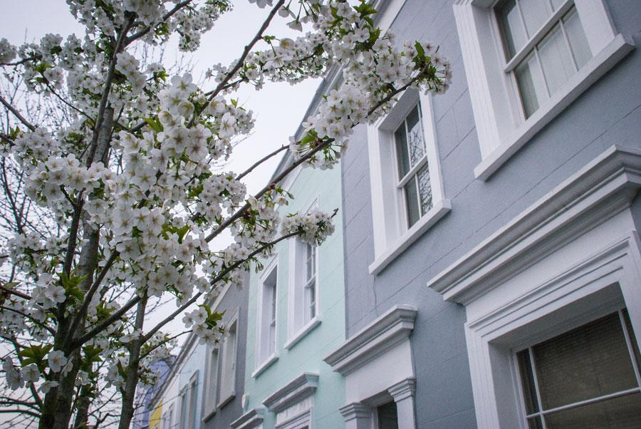 Farm-Place-Notting-Hill-Blossom-London
