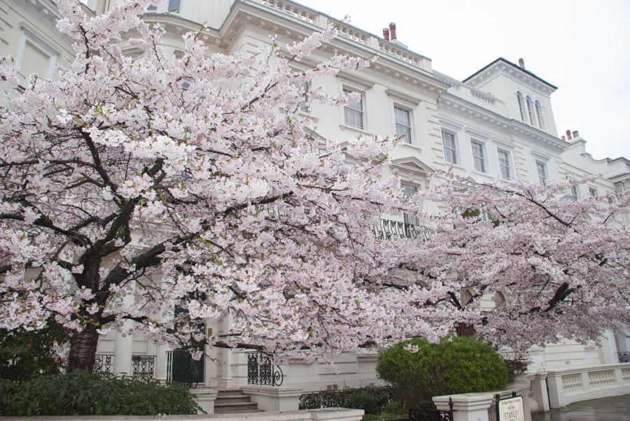 Kensington-Park-Gardens-Notting-Hill-Blossom-London