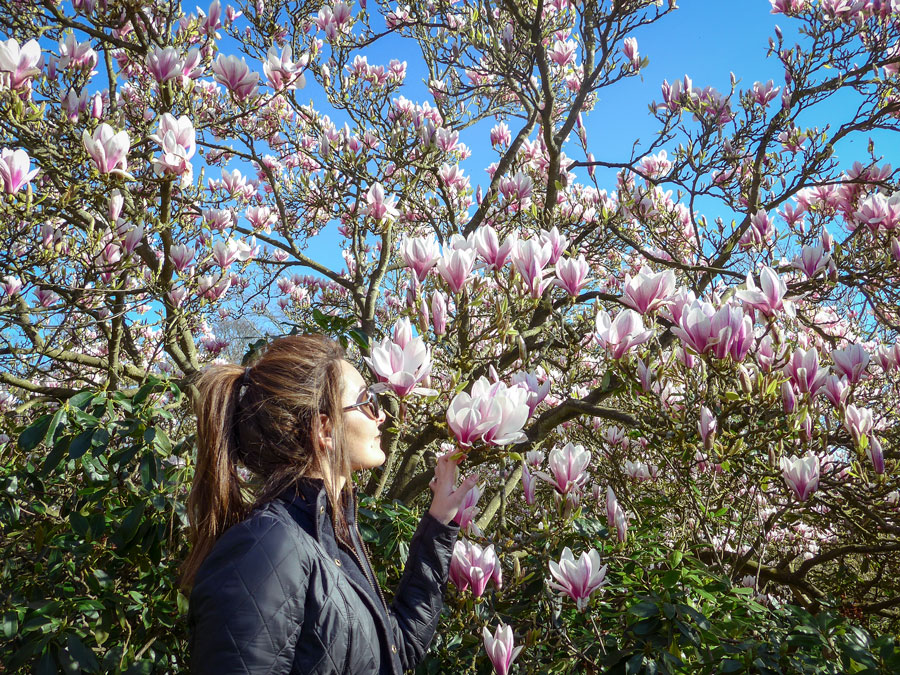 Magnolia-in-London-at-Forty-Hall-Farm