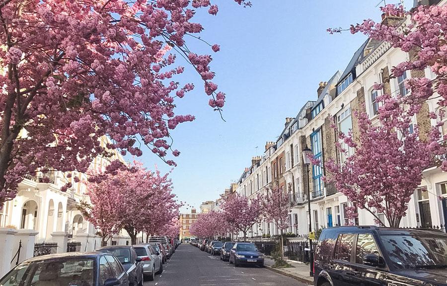 Redcliffe-Road-Kensington-Cherry-Blossom-London-