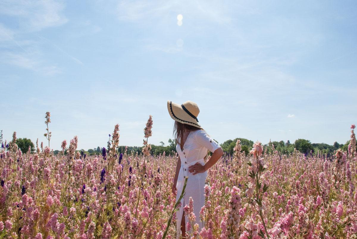 Cotswold Flower Fields - The Real Flower Petal Confetti Company Delphiniums -Wick Pershore