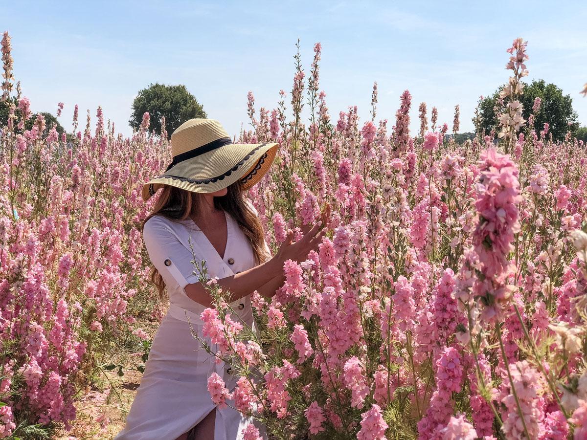 Cotswold Flower Fields - The Real Flower Petal Confetti Company Delphiniums - Picking flowers