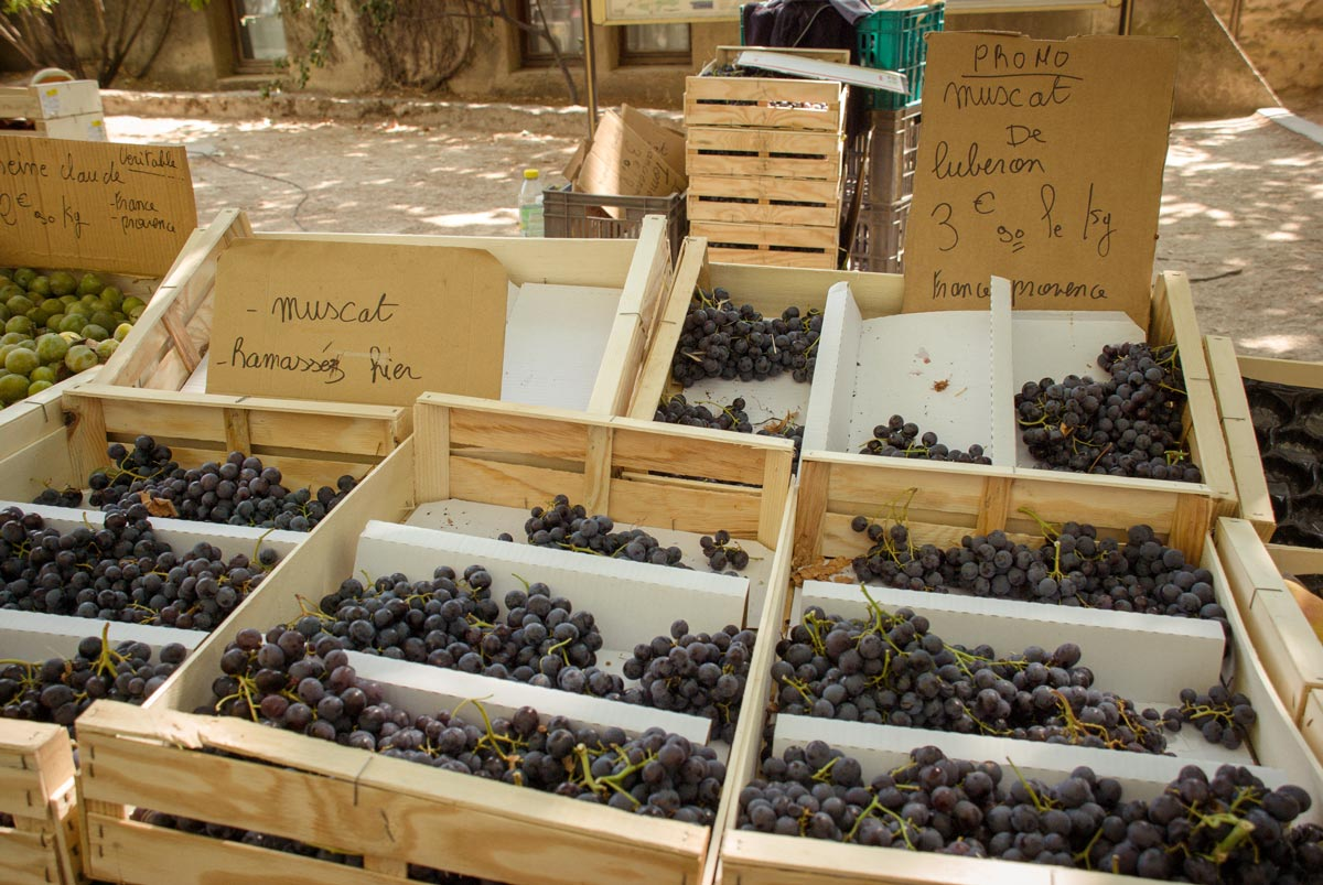 Provence Villages - South of France Provence Luberon - grapes