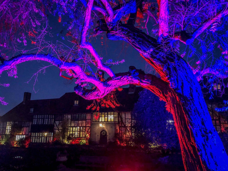 RHS Wisley Glow 2018 Uplit tree