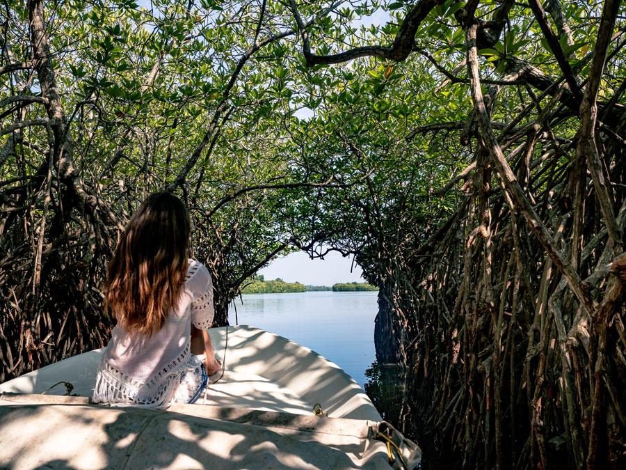 Madhu Ganga mangroves. Sri Lanka boat cruise - mangrove tunnel. Mangrove trees asia.