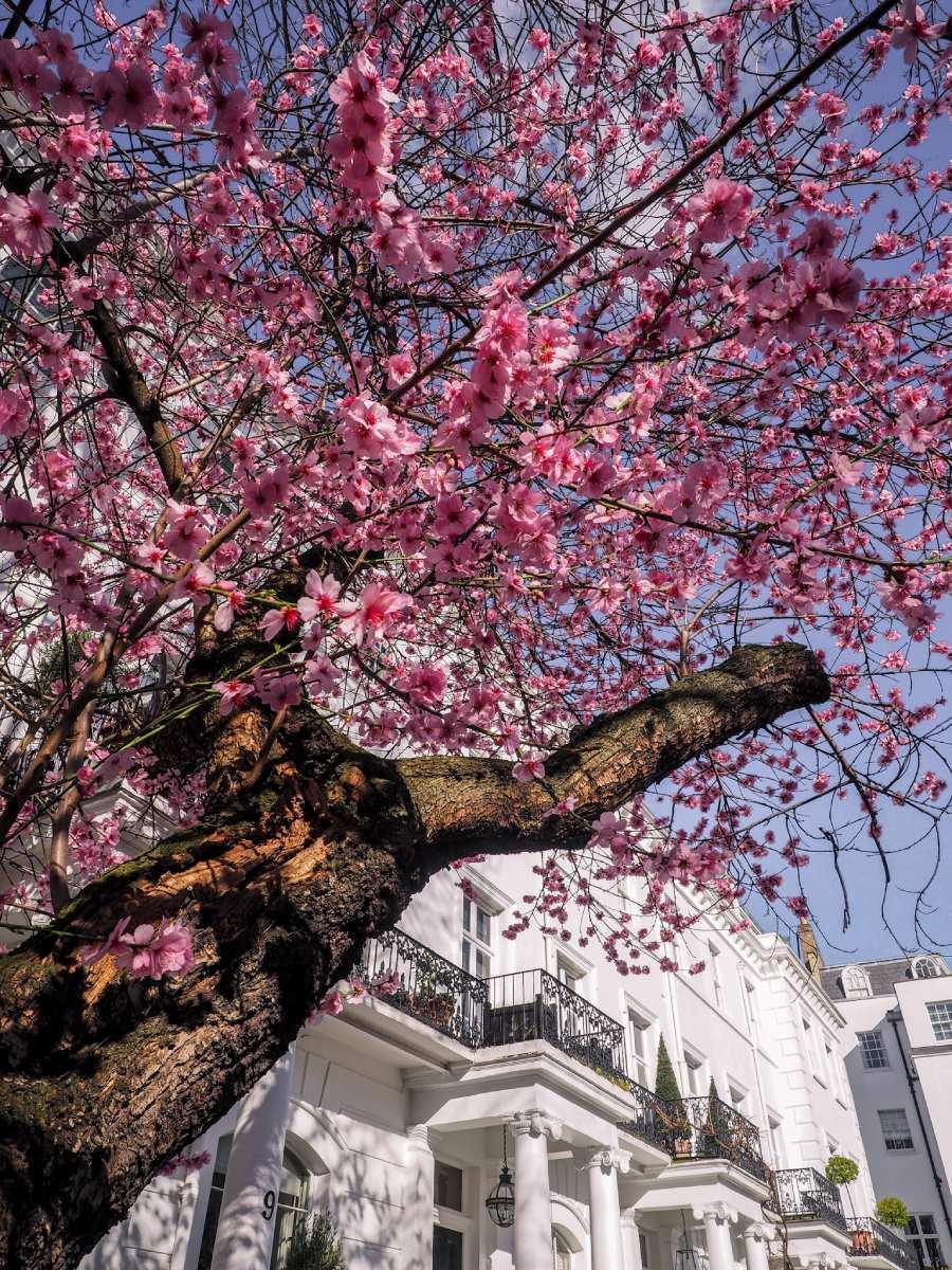 Flowering trees London